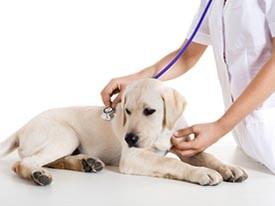 Come cambia la vostra cagnolina dopo la sterilizzazione?