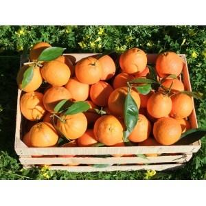 croce rossa donazione famiglia frutta kiwi mandarini corciano-centro ellera-chiugiana glocal