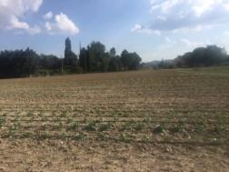 Progetto mense scolastiche: negli orti di Mantignana costruite le prime serre 1