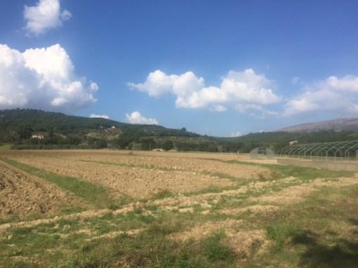 Progetto mense scolastiche: negli orti di Mantignana costruite le prime serre 4