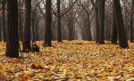 Anziano muore nei boschi del Colle della Trinità, ritrovato dal figlio dopo alcune ore