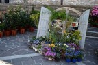 fiori giardinaggio natura orti fioriti orticoltura ellera-chiugiana eventiecultura