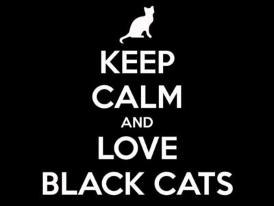 aidaa come difenderli gatti neri halloween sacrifici 4zampe