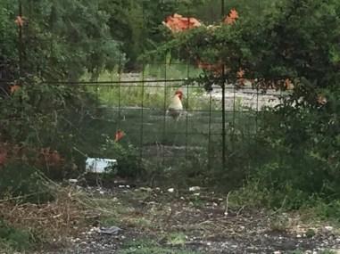 animali degrado galline palazzi segnalazione opinioni san-mariano
