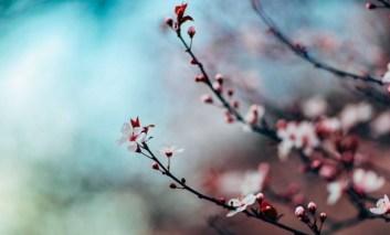 La finta primavera mette in ginocchio l'agricoltura e a rischio la vendemmia, si spera nel freddo