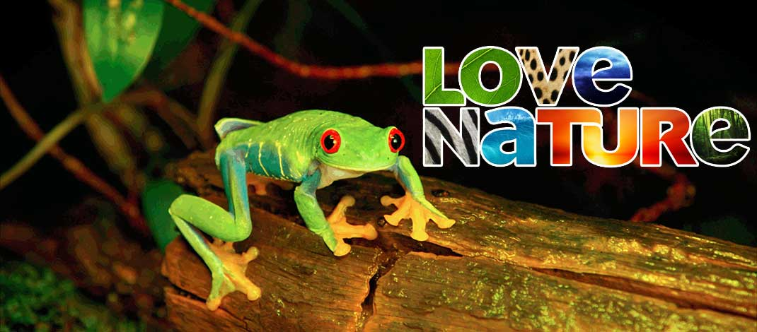 Love Nature, 4K (Ultra-HD) Wildlife & Nature Video Streaming Service Launches