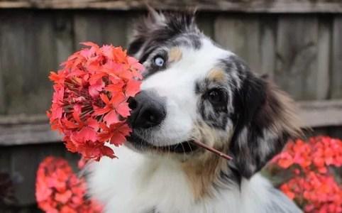 flowers-dog