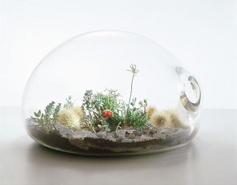 h2w_plants_terrarium.jpg
