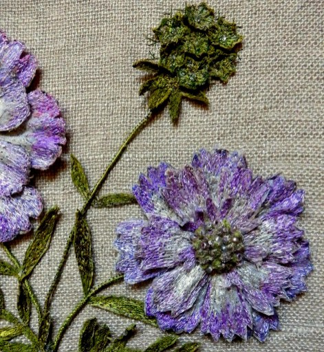 Scabious (Detail) - Harlow Carr 2016