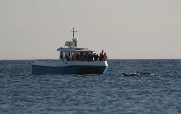 Cork Whale Watch Vessel The Holly Jo