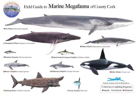Marine Megafauna of Co. Cork