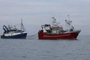 Pair trawlers targeting sprats off West Cork