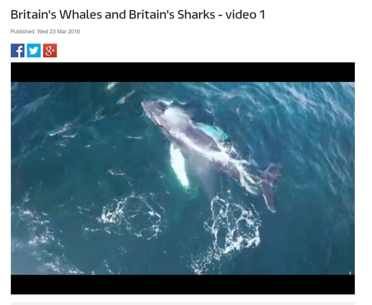 "Ireland's Humpbacks feature in ""Britain's Whales"" on ITV"