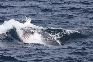 Whale Watching Schedule and Bookings