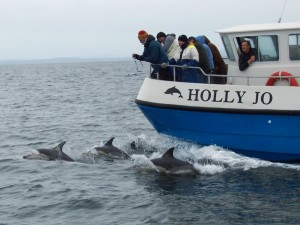Bow-riding common dolphins