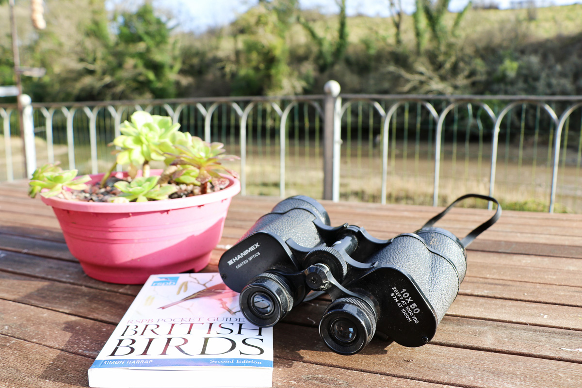 holiday cottage close to Padstow Cornwall Kingfishers bird watching