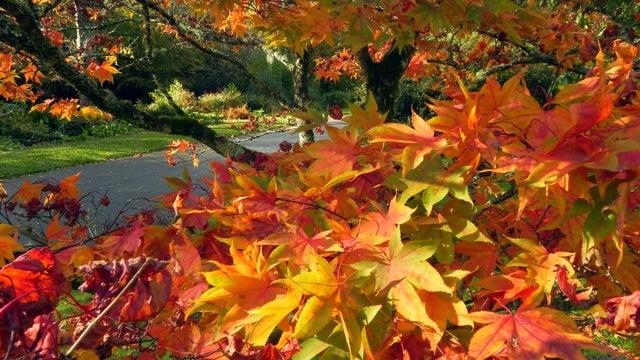Autumn In Cornwall – Enjoy The Calm!