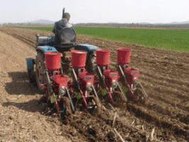 planting corn seed