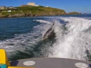 Motorcsónakot üldöznek a delfinek