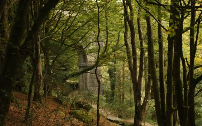 Treffry Viaduct and Luxulyan Valley – A riot of autumnal colours