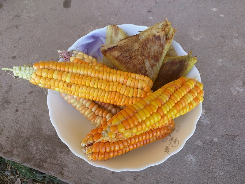 Christmas in Bolivia - Corn is at the top of the food pyramid