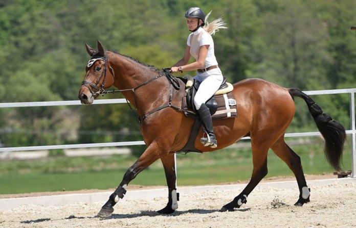 cura cavallo