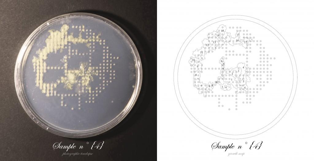 Officina-Corpuscoli-BioLogic-timelapse-overlap-frames-sample04