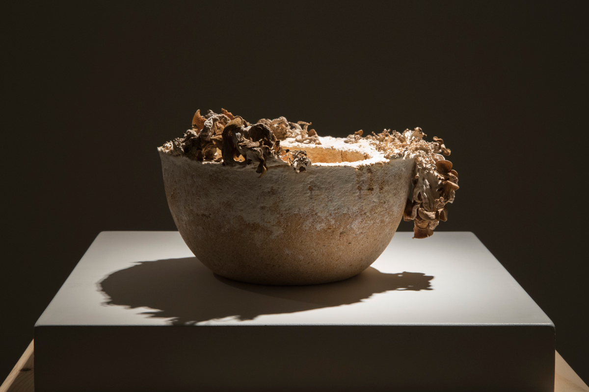 9.The Future of Plastic ©Officina Corpuscoli | Maurizio Montalti - Bowl #8 - Mycelium Bowl with fungi2