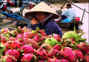 Can-Tho-woman-with-dragon-fruit