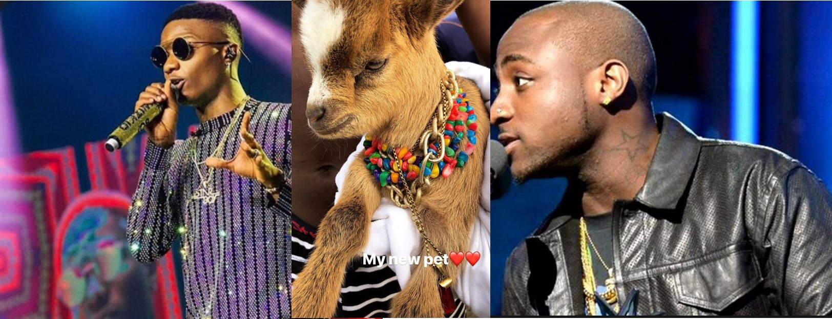 Davido reacts to Wizkid's new pet goat. (Photo)