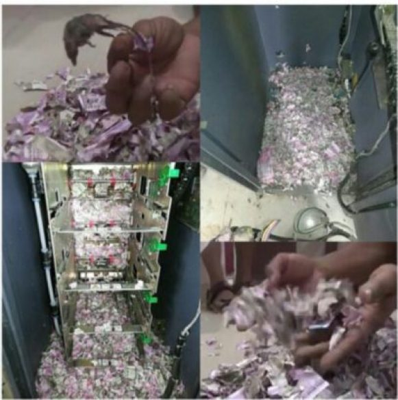 Latest News Toady!!! Rats invade ATM And Tear Money To Shreds
