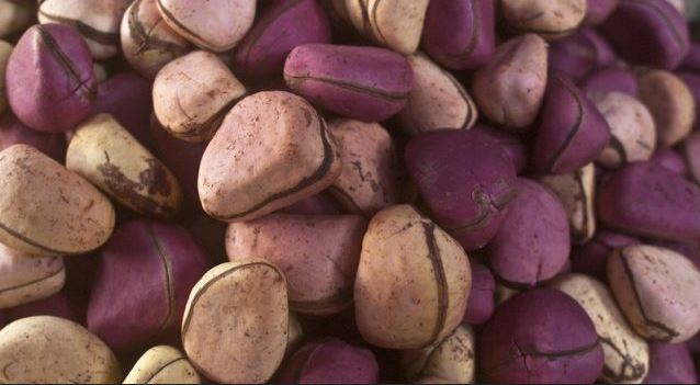 7 Health benefits of kola nuts