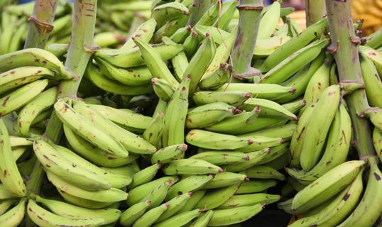Plantain: Its Nutritious and Health Benefits