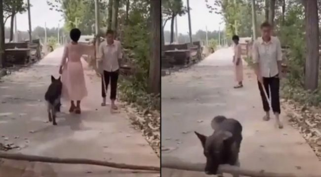 Woman walks past blind man but her dog turns back to remove log from the road to save him (Video)