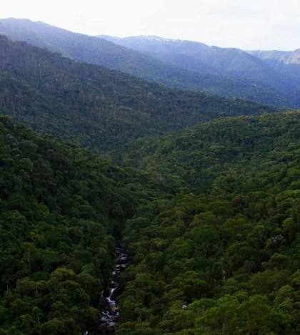 Dia da Floresta- Saneaqua