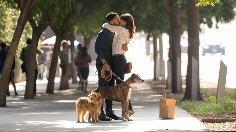 Official Trailer & Posters For DOG DAYS