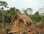 La capanna dove viveva l'indios prima dell'agguato