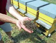 Un apicoltore italiano mostra le sue api uccise dai pesticidi