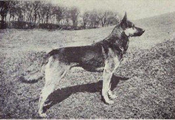I cani furono addomesticati due volte In Estremo oriente e in ...