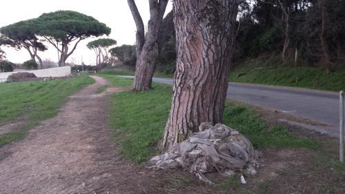 rifiuti albero baratti