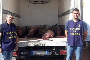 Uomini delle Fiamme Gialle etnee alla fine di un'operazione notturna hanno sequestrato una tonnellata circa di pescato illegale.