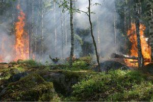 Catania, potenziamento stagionale per la prevenzione di incendi boschivi in provincia: sottoscritta convenzione
