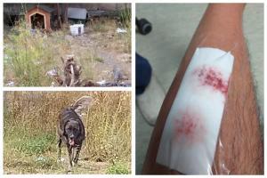 """Adrano, ciclista aggredito e morso da cani randagi: """"Ho preso anche un pugno dal tutor che era con gli animali"""""""
