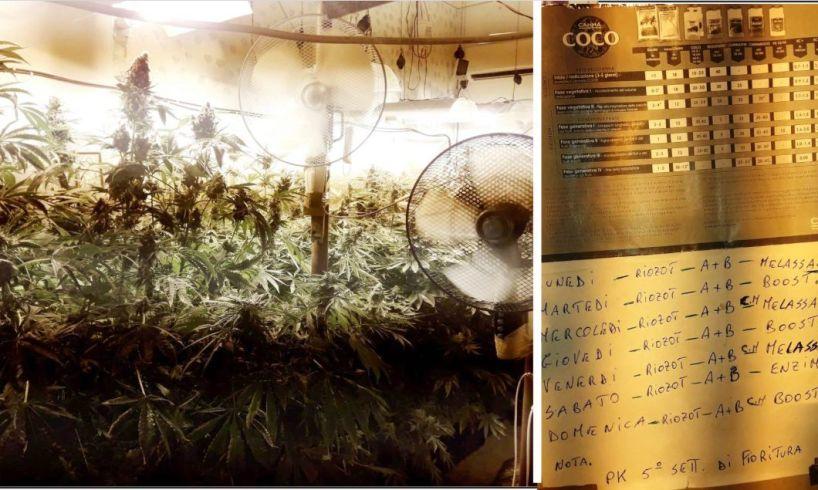 Catania, in una casa del Villaggio Azzurro 56enne coltivava cannabis e rubava la luce: i militari richiamati dall'odore della 'maria'