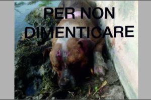 Paternò, cane randagio seviziato e dato alle fiamme: le sequenze dell'orrore (VIDEO)