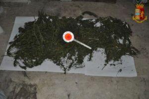Adrano, in cantina di via IV Novembre piante di marijuana stese a essiccare: si cerca l'utilizzatore