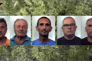 Paternò, in un aranceto maxi coltivazione di canapa indiana: 6 arresti, 1300 kg di marijuana sequestrati (VIDEO)