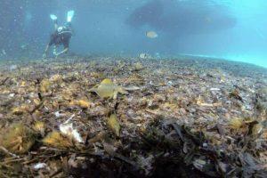 """Ambiente, a Lampedusa si puliscono i fondali di Cala Galera e della Tabaccara. Il sindaco: """"Li aiutiamo a respirare"""""""