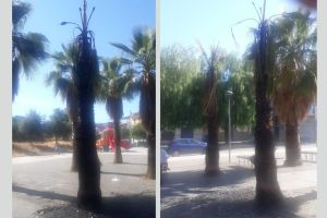 Paternò, ancora una palma bruciata: l'ultima 'specialità' dei vandali-imbecilli