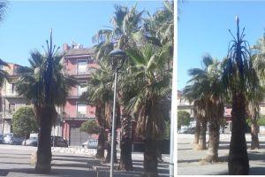 Paternò, in fiamme una palma di Piazza Don Pino Puglisi: matrice è dolosa